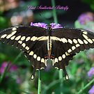 Giant Swallowtail Butterfly by Catherine Sherman