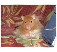 My name is Hamster Snuggles Poster