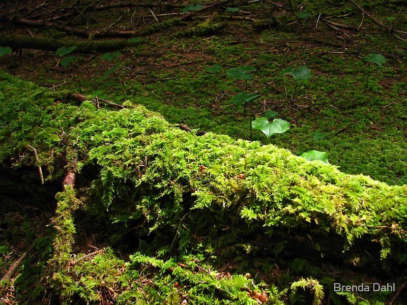 Moisture in the Air, clean Breeze, Bright Green Foliage by Brenda Dahl