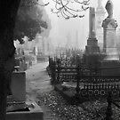 Fallen by Mieke Boynton