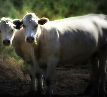 A Two-Headed Cow? by Trish Mistric