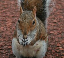 Squirrel At Royal Botanic Gardens, Edinburgh by Tasha  Blackmore