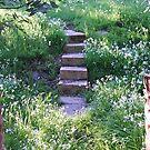 Hidden Steps by aldemore