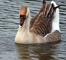 Goose on the Lake by Richard Skoropat