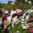 Whippets In Pose by Thomas Stevens