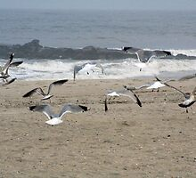 Flock Of Seagulls  by M.C. O'Connor
