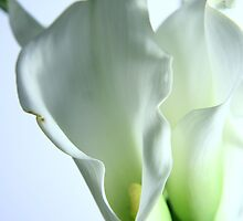 Lilies - Color version by mpphotoonline