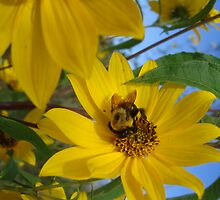 Busy as a Bumble Bee by patsyspics