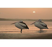 Pelican Sunrise Photographic Print