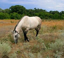 Lone Grazing Horse by Sofia Solomennikova