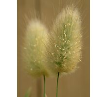 Bunny Tails Photographic Print