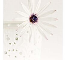 Chic White Daisy by garts