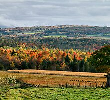 Fall Colors In Franklin by Deborah  Benoit