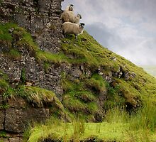 We Three Sheep by Andrew Leighton