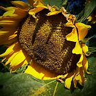 Sunflower in the spot light by Yanira Greener