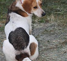 My tail loves my spots! by Linda Costello Hinchey