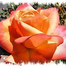 Orange and Yellow Rose by NancyC