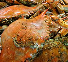 Feeling Crabby by Pam Utton