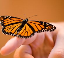 Butterfly 1 by Donav