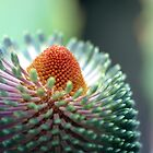 banksia by lorelle