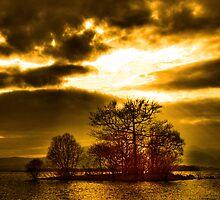 Tree Of Life by photoshotgun