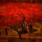 Bright Maple Tree by RobertCharles