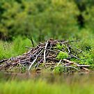 beaver lodge by Roslyn Lunetta