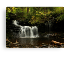 A Hint of Autumn Canvas Print