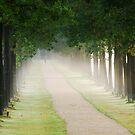 Walking on another misty lane by jchanders