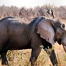"""GREAT TUSKERS OF THE """"KRUGER NATIONAL PARK"""" by Magaret Meintjes"""