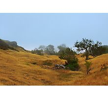 Cambria Fields Photographic Print