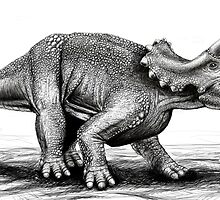 Triceratops by Dana Sibera
