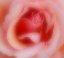 Rose I by gypsygirl