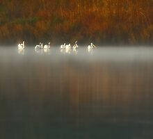 Autumn Migration by PGornell