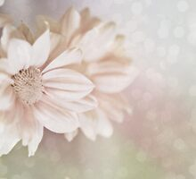 Loving soft... by Dominika Aniola