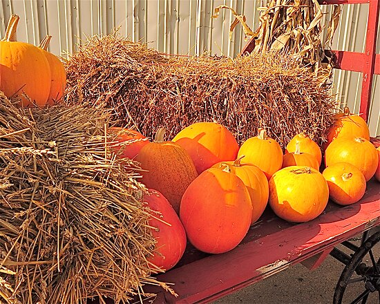 Orange pumpkins with straw on cart by H A Waring Johnson