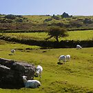 Dartmoor: Sourton Tors by Rob Parsons