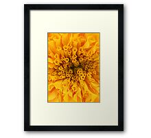 Yellow Marigold Framed Print