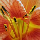Orange Lilly by Orest Macina