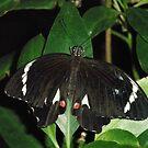 Butterfly Macro 2 by judygal