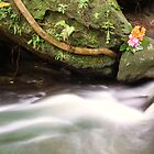 Garigal National Park Flow and Colour by Paul Duckett