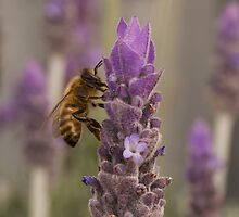 Bee by BekB