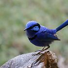 Bold in Blue by Kristiane Anderson