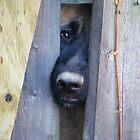 Peek-a-boo by DawnT