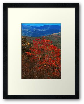 MOUNTAIN ASH,AUTUMN by Chuck Wickham