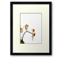 ~ nothing wilts faster than laurels that have been rested upon ~ Framed Print