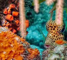 Trunk Fish by jnhPhoto