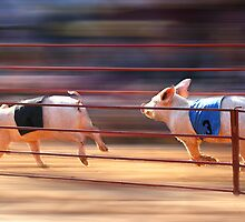 Pig Racing by Kelvin  Wong