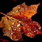 Maple Leaf by Dawn Barger