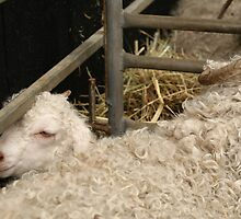I feel CRAMPED how about ewe? by Ajmdc